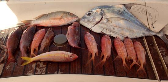 Pêche du jour.