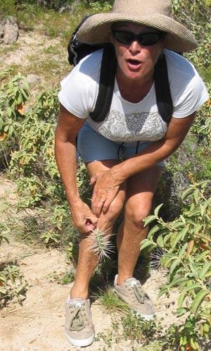 Pièges cactus locaux.