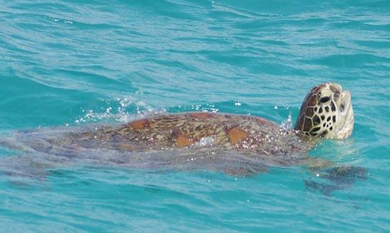 Dans les îles de Nouvelle Caledonie